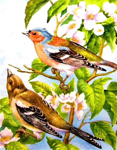 Картина по номерам 40x50 Два соловья на цветущей ветке
